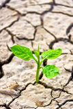 Cracked earth. Tree growing on cracked earth /hands growing tree / save the world / environmental problems / cut tree stock photos
