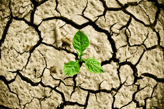 Cracked earth. Tree growing on cracked earth /hands growing tree / save the world / environmental problems / cut tree royalty free stock photos