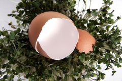 Cracked Egg on Green Sprout Grass Royalty Free Stock Photo