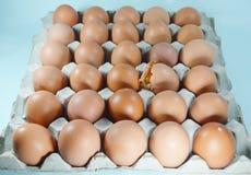 Cracked egg Stock Photography