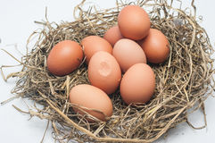 Cracked eggs and some egg. In straw Royalty Free Stock Photos