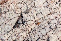 Cracked floor of destroyed building. Cracked floor of destroyed building in abandoned area Royalty Free Stock Image