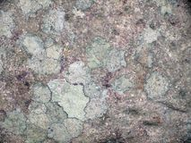 Cracked floor texture Stock Image