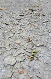 Cracked grey soil texture. Cracked soil texture with some dry leaves Stock Images