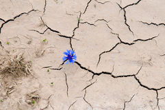 Cracked ground Stock Photography