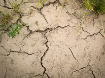 Cracked ground. Background with cracked ground and green grass Stock Photos
