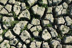 Cracked ground Stock Images