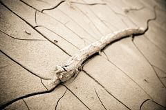 Cracked ground: the effects of drought Royalty Free Stock Photography