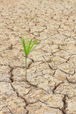 Cracked ground. Plants that grow on the ground cracked Royalty Free Stock Photo
