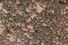 Cracked ground. Summer cracked ground in field Royalty Free Stock Photos
