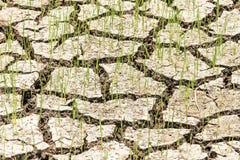 Cracked ground texture Stock Photo