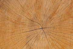 Cracked growth rings, cut wooden background Stock Photos