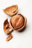 Cracked Hazelnut Stock Images