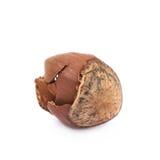 Cracked hazelnut isolated Royalty Free Stock Image