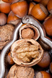 Cracked hazelnut and walnut inside of a retro nutcracker Stock Image