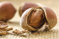 Cracked hazelnuts extreme closeup Royalty Free Stock Photography