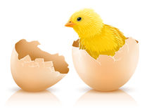 Cracked hen's egg with chicken baby inside stock illustration