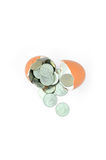 Cracked hen`s egg and thailand coins. Stock Photography