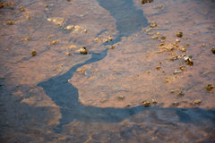 Cracked Hot Spring. Some hot springs at Yellowstone National Park had very interesting textures within the pools. This spring had areas where the rocks were Royalty Free Stock Photography