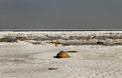Cracked ice on sea surface. Stock Images