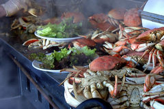 cracked krabba Royaltyfri Bild