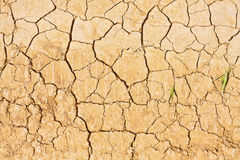 Cracked land Royalty Free Stock Image