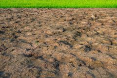 Cracked land and rice fields. It`s contrast with color and feeling. Chacked land is brown and dry. It`s dry clay. In the cracked land have a puddle tree. But royalty free stock photography