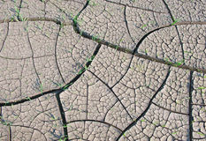 Cracked land texture with grass Stock Image