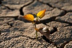 Cracked lifeless soil stock image