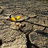Cracked lifeless soil. Cracked by the heat long lifeless soil Stock Photo
