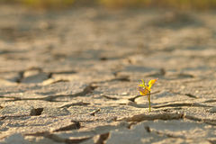 Cracked lifeless soil Stock Images