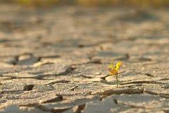 Cracked lifeless soil stock images
