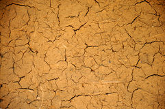 Cracked loam Stock Images
