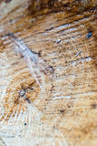 Cracked log Stock Images