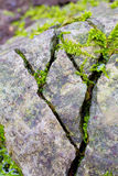 Cracked Moss Rocks. Some stones have big cracks in them and moss plantlife is growing out of the cracks Royalty Free Stock Images