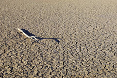 Cracked mud. Dead tree branch laying in a field of cracked mud Royalty Free Stock Photography