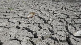 Dry lake bed with cracked ground
