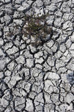 Cracked mud on dried up Big Muddy Lake Royalty Free Stock Photos