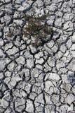 Cracked mud on dried up Big Muddy Lake Royalty Free Stock Photos