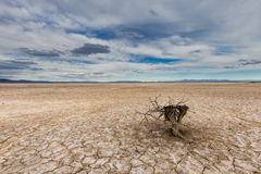Cracked mud flat with tree stub. This photo was taken near Delta Utah and contains a cracked mud flat with clouds, and mountains in the background Stock Photos
