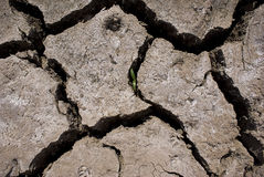 Cracked Mud - Life Amongst the Dead Royalty Free Stock Photo
