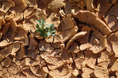 Cracked mud with plant Royalty Free Stock Photography