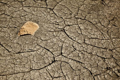 Cracked Mud Representing Drought Useful as Backgro Stock Images