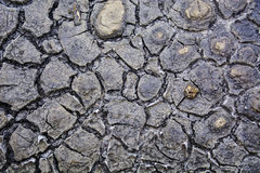 Cracked mud texture Royalty Free Stock Images