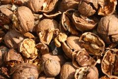 Cracked nuts, fruits of wallnut. Royalty Free Stock Photos