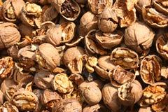 Cracked nuts, fruits of wallnut, Juglans regia L. Royalty Free Stock Photo