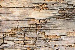 Cracked old bark on the texture Stock Image