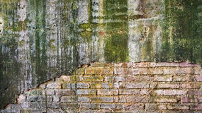 Cracked old brick and concrete wall covered with moss and tree t Stock Photos