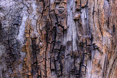 Cracked old tree stump texture Royalty Free Stock Photography