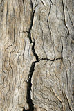 Cracked old wood. Cracked old pine wood with contorted grain royalty free stock photos
